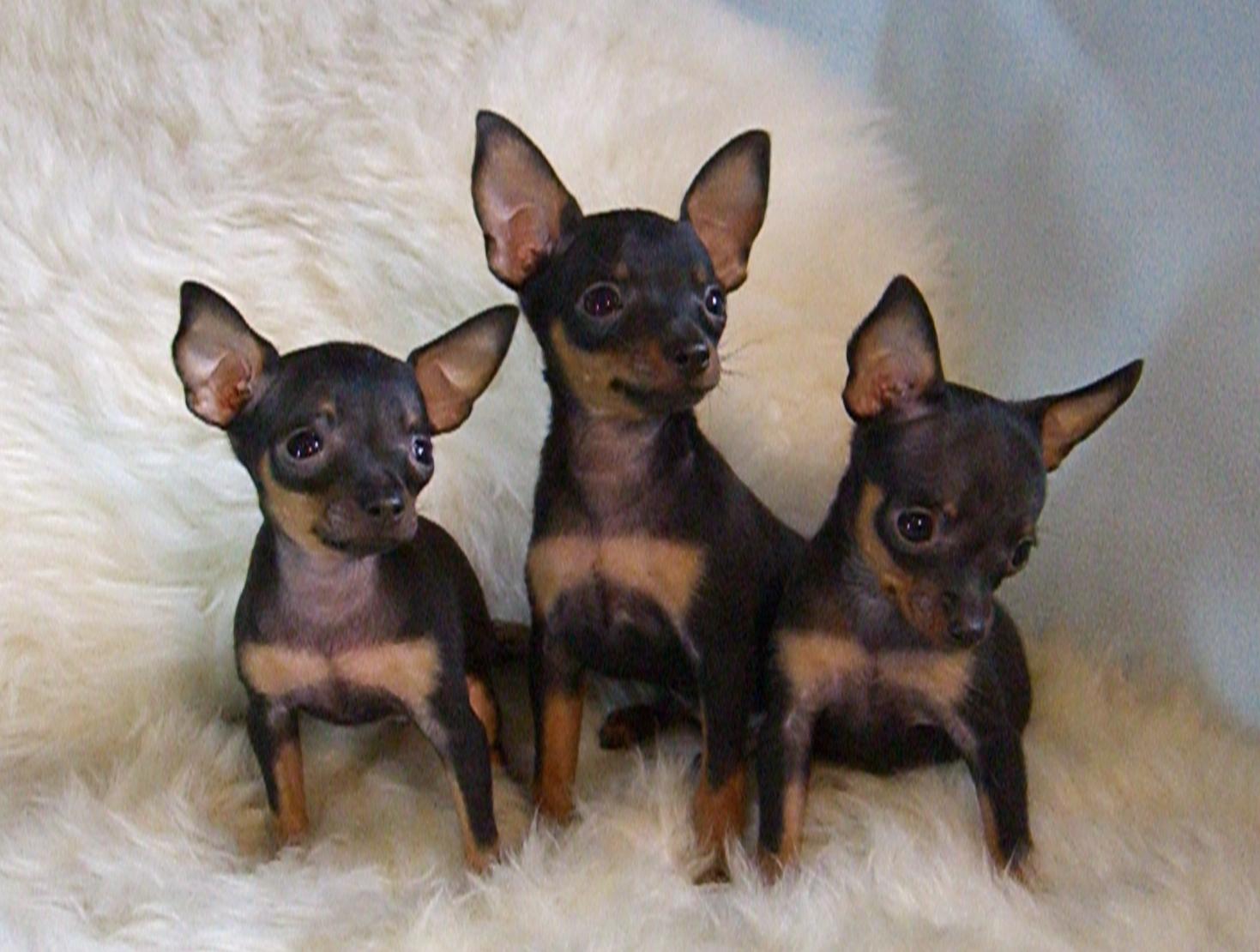 породы собак Picture